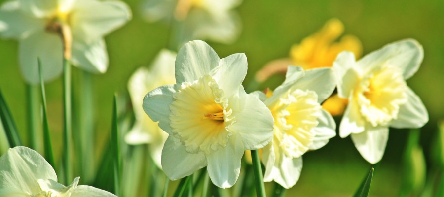 Happy Easter from C King Benefit Auctions